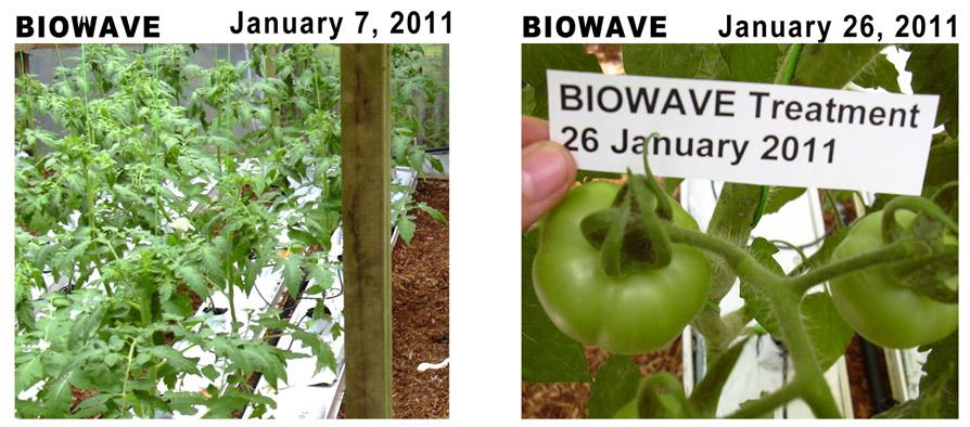 biowave